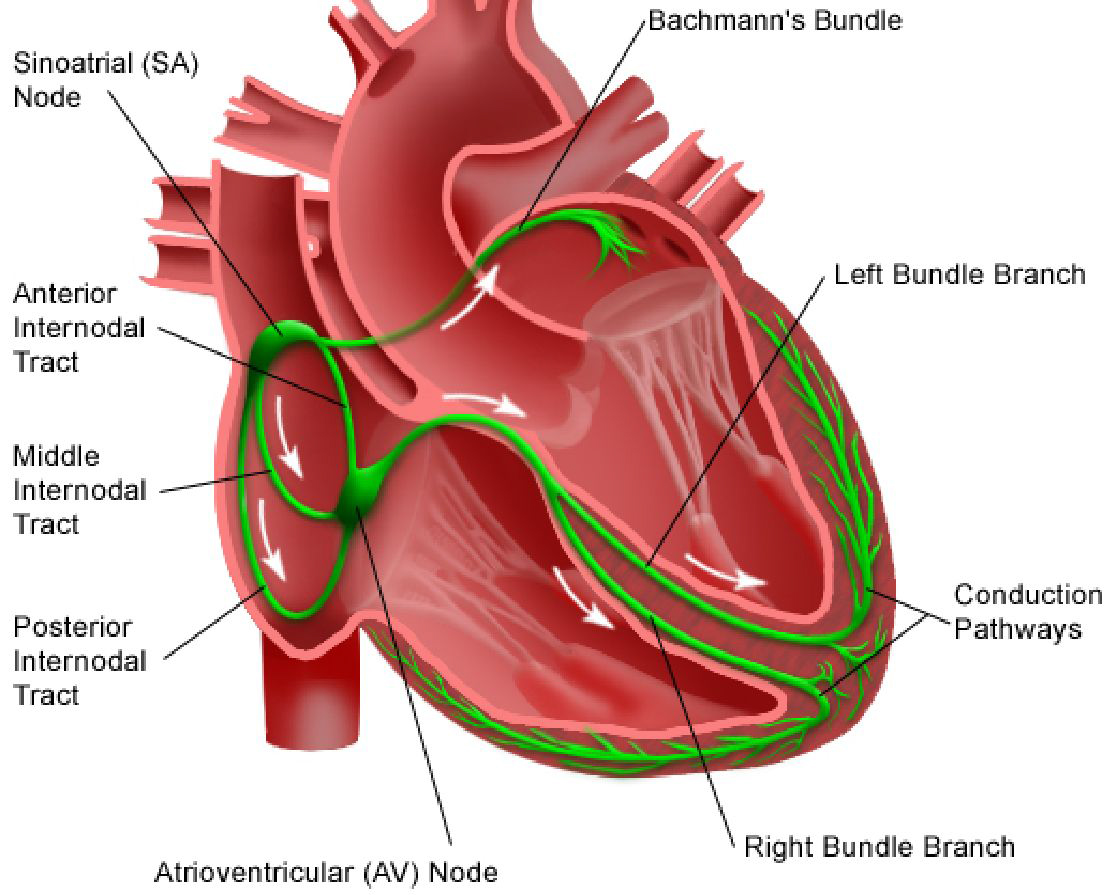 Cardiac Surgery Center in Pune