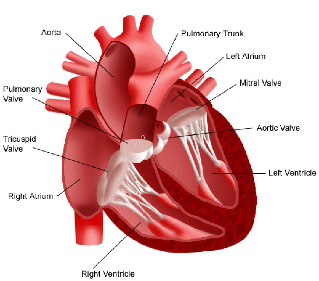 Cardiac Surgery In Pune